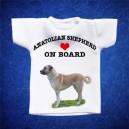 Anatolian Shepherd 1