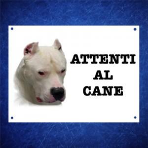 Dogo Argentino 1
